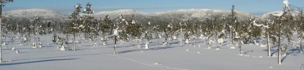 Mitt Lidsjöberg
